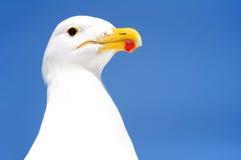 Mouette dans la baie de Walvis Images libres de droits