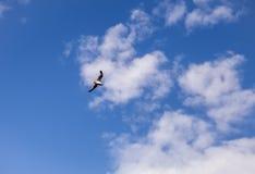 Mouette dans le ciel Photo stock