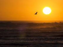 Mouette dans le coucher du soleil à l'océan Images libres de droits