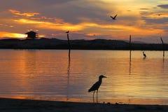 Mouette dans le lever de soleil de cascades sur la plage Images libres de droits