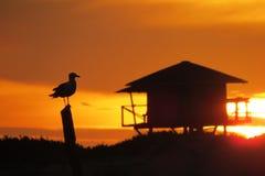 Mouette dans le lever de soleil de cascades sur la plage Photos stock
