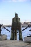 Mouette dans le port image stock