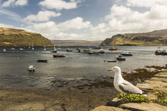 Mouette dans le port de Portree Photo libre de droits