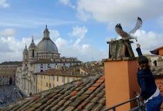 Mouette de alimentation de fille, Piazza Navona, Rome, Italie Photographie stock libre de droits