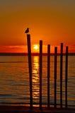 Mouette de coucher du soleil Photographie stock
