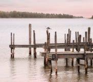 mouette de dock photos stock