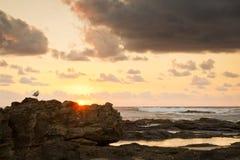 Mouette de lever de soleil sur des roches Images libres de droits