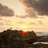 Mouette de lever de soleil sur des roches Images stock