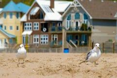 mouette de maisons de plage de fond Photos stock