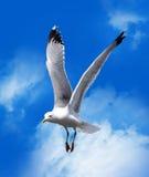 Mouette de mer Photos libres de droits
