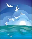 Mouette de mer Image stock