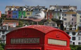 Mouette de mer sur une cabine téléphonique Image stock