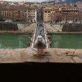 Mouette de Rome Photo libre de droits