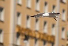 Mouette de ville Photo libre de droits