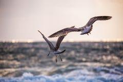 Mouette de vol au-dessus de la mer bleue photo stock