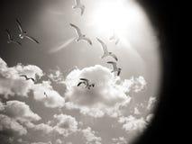 Mouette de vol par une lentille Images stock