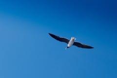 Mouette de vol sur le beau fond de ciel Photographie stock libre de droits