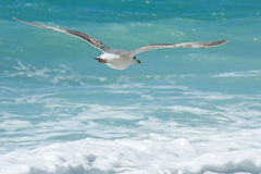 Mouette de vol sur le fond de la mer Photographie stock
