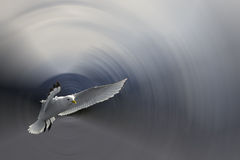Mouette en vol image libre de droits