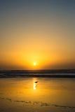 Mouette et coucher du soleil Images stock