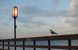 Mouette et coucher du soleil Photographie stock libre de droits