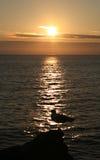 Mouette et coucher du soleil Photographie stock
