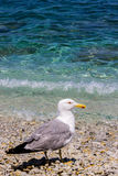 Mouette et la plage Photo stock