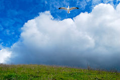 Mouette et nuages Images libres de droits