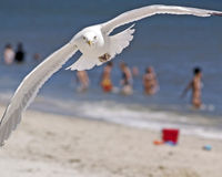 Mouette et plage photo stock