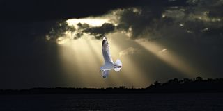 Mouette et rayons de soleil dans le coucher du soleil d'océan Image libre de droits