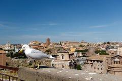 Mouette et Roman Forum images libres de droits