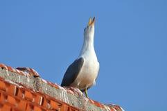 mouette Jaune-à jambes restant sur un toit Photo libre de droits