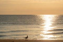 Mouette - mer baltique - île d'Usedom images libres de droits