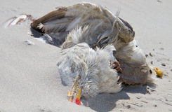 mouette morte Images stock