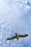 Mouette, nuages et jour Photo libre de droits