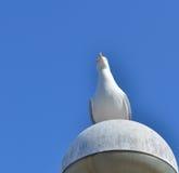 Mouette observant le photographe Photo libre de droits