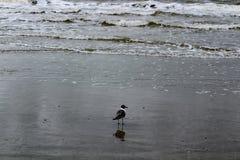Mouette observant les vagues Image stock