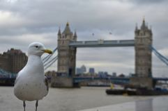 Mouette près de Towerbridge Photos stock