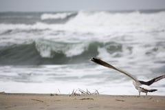 Mouette prête à effectuer le vol au-dessus des vagues Images libres de droits