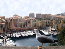 Mouette regardant fixement des yachts au Monaco photos libres de droits
