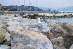 Mouette regardant le port fixement proche lointain Photographie stock