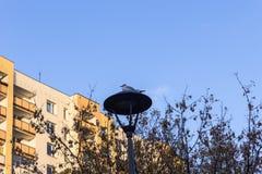 Mouette se reposant sur un poteau de lampe Photo libre de droits