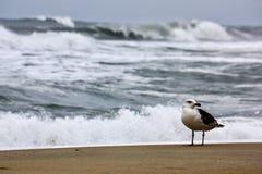 Mouette se tenant près de l'océan Photos stock