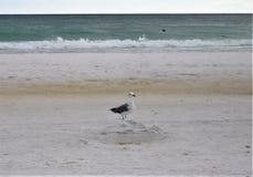 Mouette se tenant sur le château tombé de sable images stock