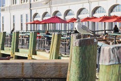 Mouette se tenant sur le poteau en bois Images stock