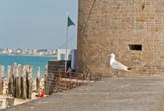 Mouette se tenant sur le vieux mur de ville de Saint Malo Photos libres de droits