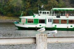 Mouette se tenant sur une balustrade près de la rivière Images libres de droits