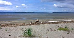 Mouette seule sur la plage d'océan Photographie stock libre de droits