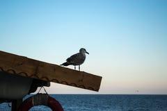 Mouette seule sur le toit observant la mer dans le coucher du soleil Photographie stock