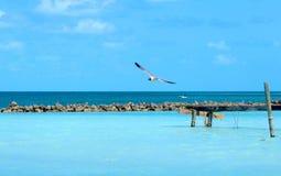 Mouette solitaire glissant au-dessus de l'eau bleue peu profonde images libres de droits